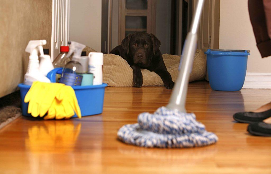 sprzątanie przeprowadzka katowice